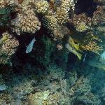 Blue Lagoon Marsa Alam Foto