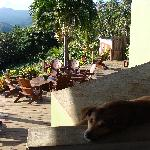 Chocolate, one of the Bar and Grill's rescue dogs, having a lazy start to the morning...