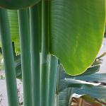 Loved the sound of wind in the fan palm leaves