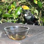 Tui on the birdtable