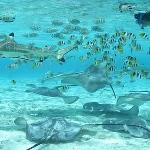 Private snorkeling Excursions