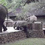 Elephants at the Lodge