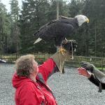 Dream come true - holding a Bald Eagle