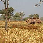 A typical landscape, end of rice harvest