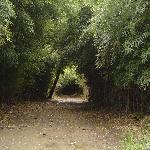 Furnas Lake Path