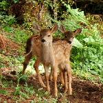 Lots of fawns to be seen