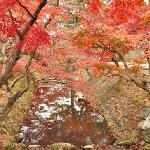 Nara park in early December