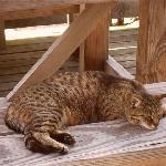 cuddly cat