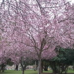 Trees blooming in February.