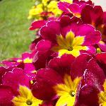 Flores del Hotel