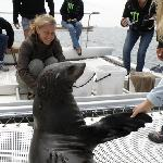 encounter with a seal, Walvis Bay