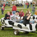 The Cow Train