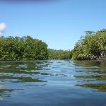 Isla Violin Eco-Lodge resmi