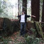 Really big stump