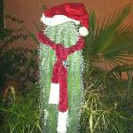 Christmas cactus in courtyard