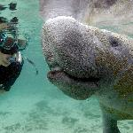 My Almost Manatee Kiss!