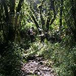 Tupido bosque en el recorrido del Pasochoa