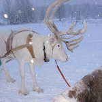 Photo de Hotel Hullu Poro - The Crazy Reindeer