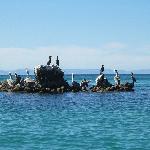 pelicans cormorants etc sitting on only rock in bay