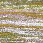 Goegap, impressionistische Gemälde aus Blumen