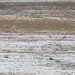 Goegap: Zebras, Oryx, Springböcke