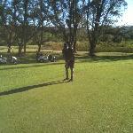 Golfing away