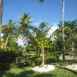 Garten Melia Tropical