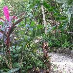 Small garden at Aerolito