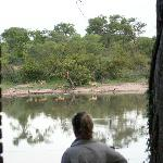 View of waterhole from room #3