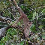 One of the many capuchin monkeys we saw