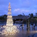 Mauritian Christmas tree