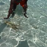 colore dell' acqua