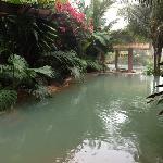 hot springs pool and bar