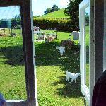 Birdseye view from bungalow windows