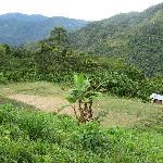 High Jungle