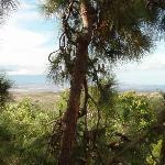 View from B&B lanai