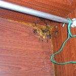 More rot/mould in the cupboard