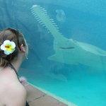 Foto de Predator Lagoon