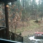The view out the back of Pair Tree