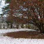 The Maple tree on the grounds..