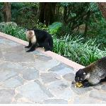 coatis and monkeys came to the lodge
