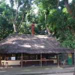 The AFEX bar under mango trees
