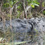 Garl's Coastal Kayaking Everglades