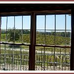 Looking out the window towards the vinyards