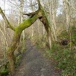 The odd shaped tree