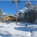 Le bois faé en hiver