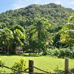 de reef apts grounds bequia