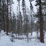 Bigfoot showshoe trail