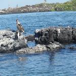 ISLOTE CON PINGUINOS