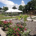 Ficus al fresco function area.  Great for wedding receptions and garden parties.
